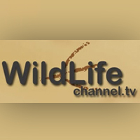 wild-life-channel-tv online